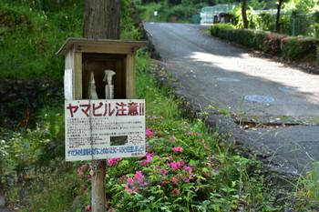 DSC_3891ヤマビル.JPG