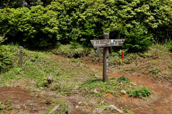 DSC_3948袖平山と蛭ヶ岳へ行く道が分かれる.JPG