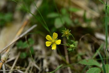 DSC_4055黄色い花.JPG