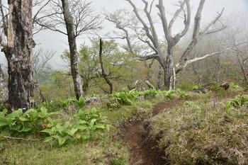 DSC_8079蛭へ向かう檜洞山頂出発.JPG