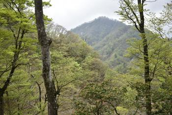 DSC_8091石棚山か4.JPG