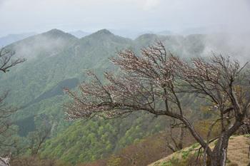 DSC_8159山桜と宮ヶ瀬方面.JPG