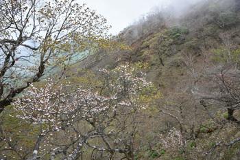 DSC_8174ガレた山肌.JPG