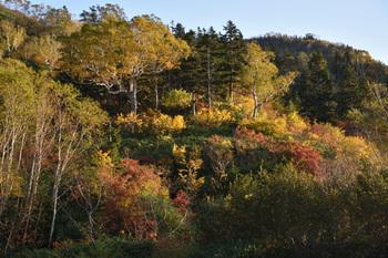 _DSC_0824自然公園にて紅葉の木々.JPG