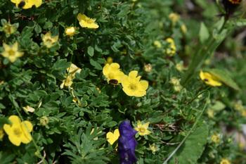 _DSC_9544_01黄色い花.JPG