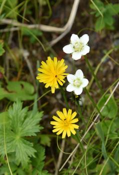 _DSC_9951_01 (2)白い花と黄色い花.JPG