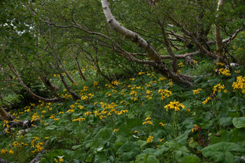 _DSC_9959_01黄色い花がいっぱい.JPG