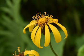 _DSC_9962_01 (2)黄色い花の拡大.JPG
